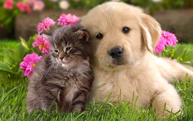 18 réponses aux questions les plus posées par les internautes sur les chats et les chiens