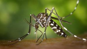 répulsifs à moustiques