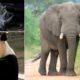 Ces 14 animaux que vous connaissez bien mais que vos enfants risquent de ne jamais connaître