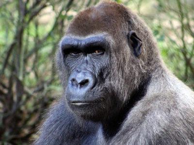 Un paradis profané dans le Parc des Virunga